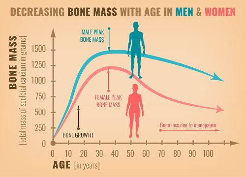 menopause-induced bone loss