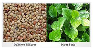 piper betle and docholis biflorus